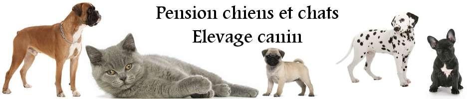 Pension et élevage canin de la petite vallée des chiens