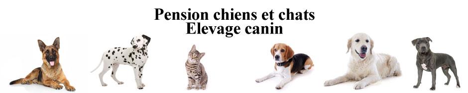 La Petite Vallée des Chiens : Pension Chiens Chats et Élevage canin